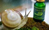 snail-slime.jpg